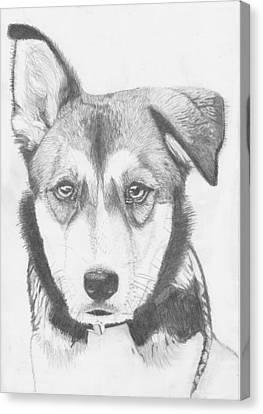 Husky Shepherd Cross Canvas Print by David Smith