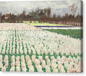 Hyacinth Fields Canvas Print by George Hitchcock