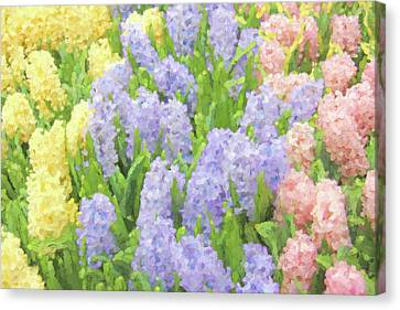 Canvas Print featuring the photograph Hyacinth Flowers In The Spring Garden by Jennie Marie Schell