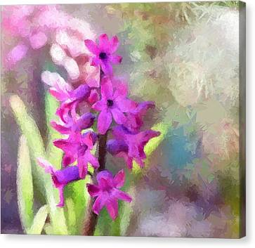 Hyacinth Canvas Print by Louise Lavallee
