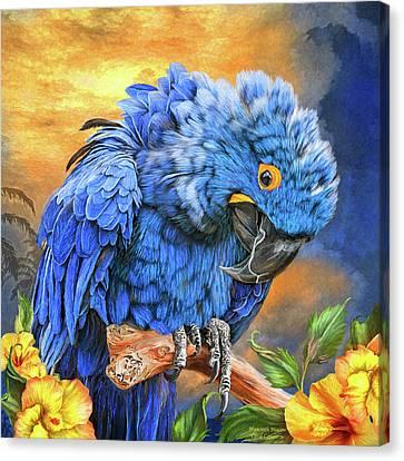 Hyacinth Macaw Canvas Print by Carol Cavalaris