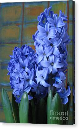 Canvas Print featuring the photograph Hyacinths by Patricia Januszkiewicz
