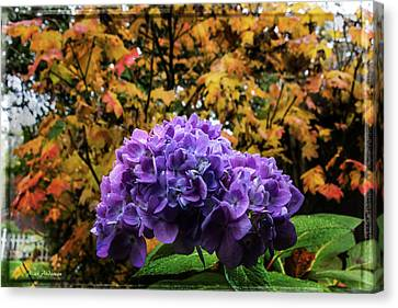 Hydrangea Autumn  Canvas Print by Mick Anderson