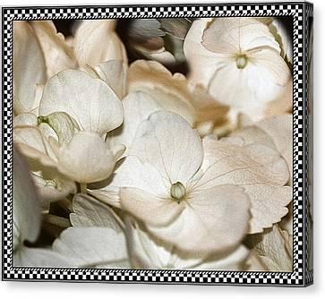 Hydrangea Blossom Framed Canvas Print by Andrea Lazar