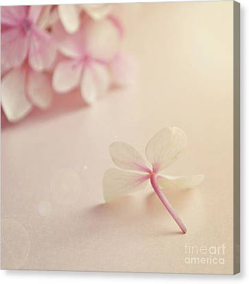Canvas Print featuring the photograph Hydrangea Flower by Lyn Randle