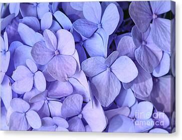 Canvas Print featuring the photograph Hydrangea by Kerri Farley