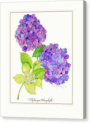 Hydrangea Canvas Print by Kimberly McSparran