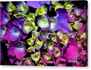 Canvas Print featuring the photograph Hydrangea by Vivian Krug Cotton