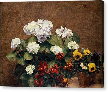 Hydrangeas And Wallflowers And Two Pots Of Pansies Canvas Print by Henri Jean Fantin-Latour