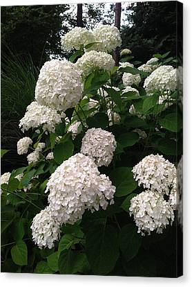 Canvas Print featuring the photograph Hydrangeas by Ferrel Cordle