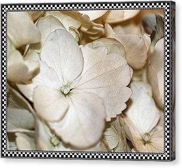Hydrengea Blossom 3 Framed Canvas Print by Andrea Lazar
