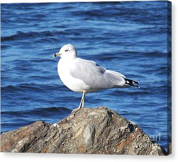 Canvas Print featuring the photograph I Am A Rock Star - Photograph by Jackie Mueller-Jones