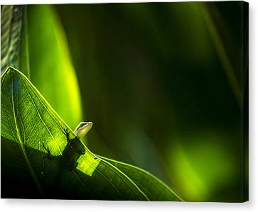 I Am Looking At You Canvas Print by Marvin Spates