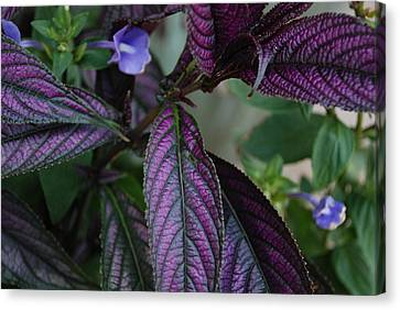 I Am Purple Canvas Print