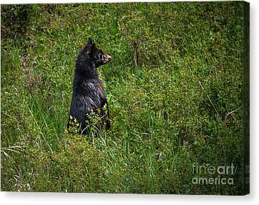 Survive Canvas Print - I Am So Handsome by Robert Bales
