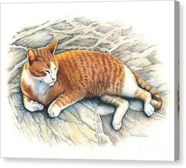 Pet Canvas Print - I Am Tiger by Catherine Garneau