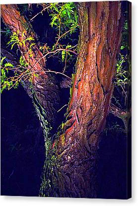 Canvas Print - I Am Tree by Guy Ricketts