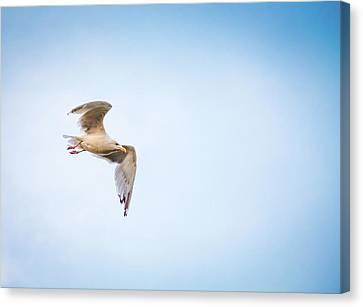 Canvas Print featuring the photograph I Believe I Can Fly by Joel Witmeyer