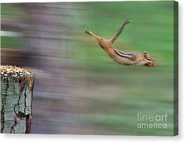 I Can Fly Canvas Print by Dan Friend
