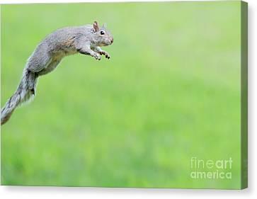 I Can Jump Over 6 Feet Canvas Print by Dan Friend