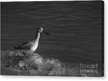 I Can Make It - Bw Canvas Print by Marvin Spates