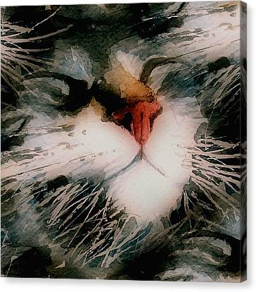 I Can't Make You Love Me Canvas Print by Paul Lovering