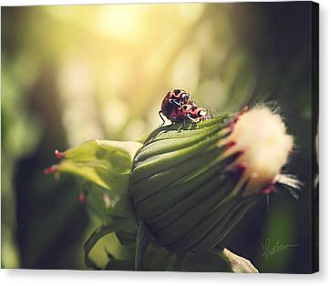 Canvas Print featuring the photograph I Do by Kharisma Sommers