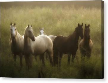 I Dreamed Of Horses Canvas Print