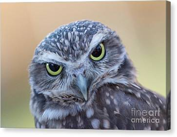 Canvas Print featuring the photograph I Give A Hoot by Chris Scroggins