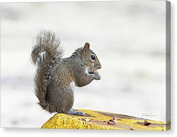 Canvas Print featuring the photograph I Have My Nuts by Deborah Benoit