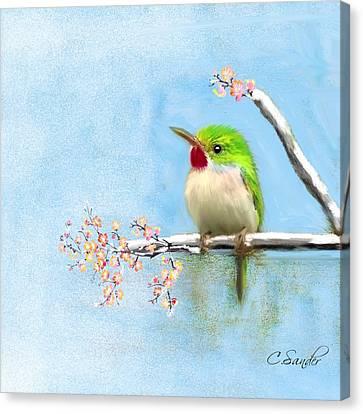 I Know My Way Bird  Birds Art Amerika  Canvas Print by Carmen Sander