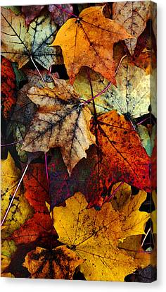 Red Leaf Canvas Print - I Love Fall 2 by Joanne Coyle
