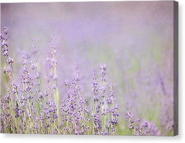 Farm Fields Canvas Print - I Love Lavender by Lori Deiter