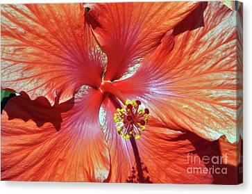 I Love Orange Flowers 2 Canvas Print