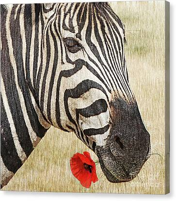 I Love Red Canvas Print by Barbara Dudzinska