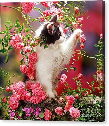 I Love Roses Canvas Print