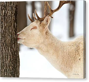 I Love This Tree Canvas Print