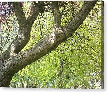 I Love You Tree Canvas Print by Judith Desrosiers