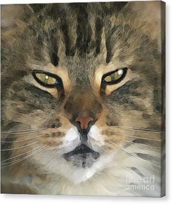 I Miss Him Sometimes ... Canvas Print by Gwyn Newcombe