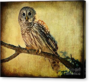 Solitude Stands While Wisdom Draws Near Canvas Print by Heather King