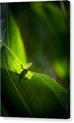 I See Green Canvas Print by Marvin Spates