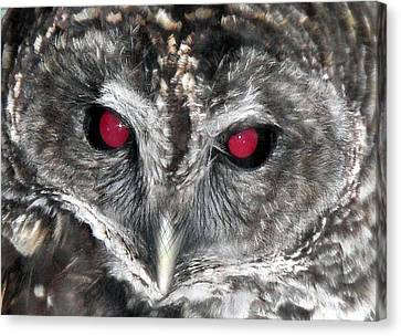 I See You Canvas Print by Karen Wiles