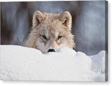 I See You Canvas Print by Michael Cummings