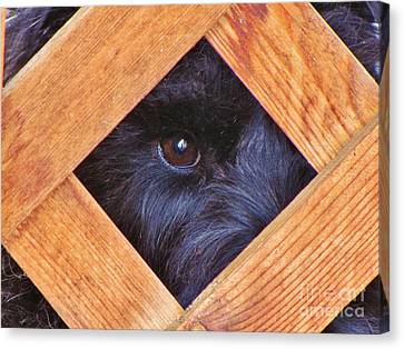Look Closely  Canvas Print by Michele Penner