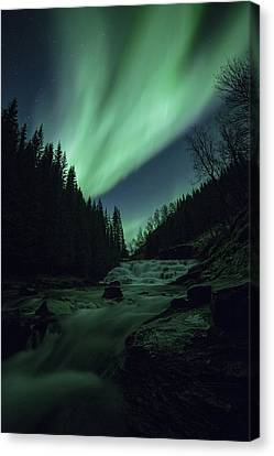 I See You Canvas Print by Ronny Aarbekk