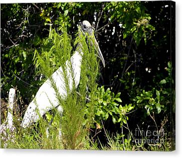 Canvas Print featuring the photograph I See You by Terri Mills