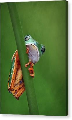 I See You - Tiger Leg Monkey Frog Canvas Print