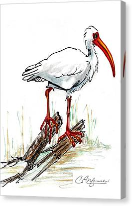 Ibis On A Perch Canvas Print