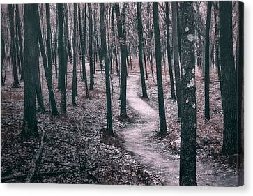 Muted Canvas Print - Ice Age Trail Near Lapham Peak by Scott Norris