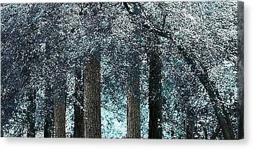 Ice Blue Arch Canvas Print by Ellen O'Reilly